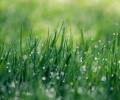 Nebaví vás okopávání záhonů? Založte si na zahradě trávník!